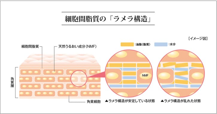 オーガニック発酵スーパーモリンガ ラメラ構造