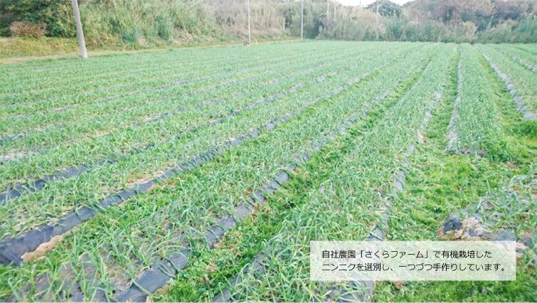 糸島にあるメーカー自社農園「さくらファーム」