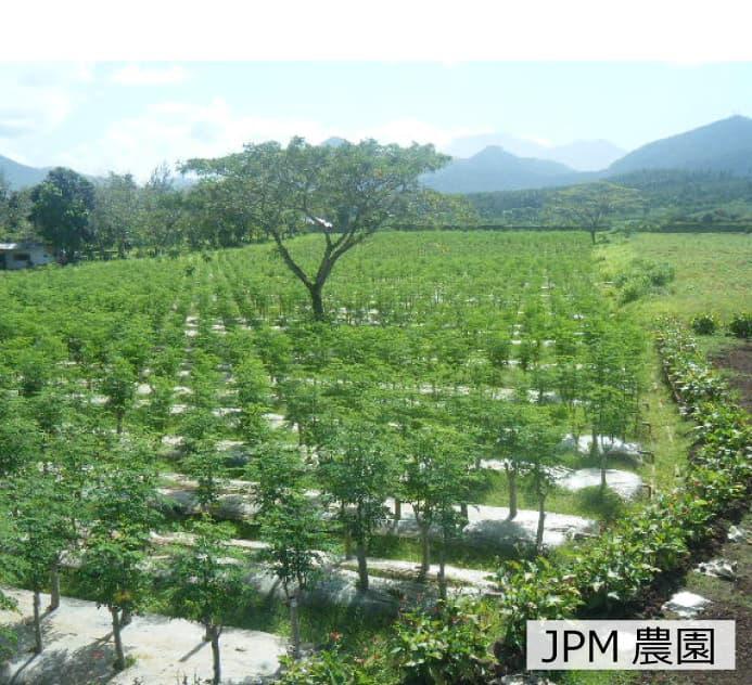 JPM農園