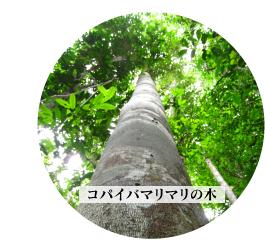 コパイバマリマリの樹