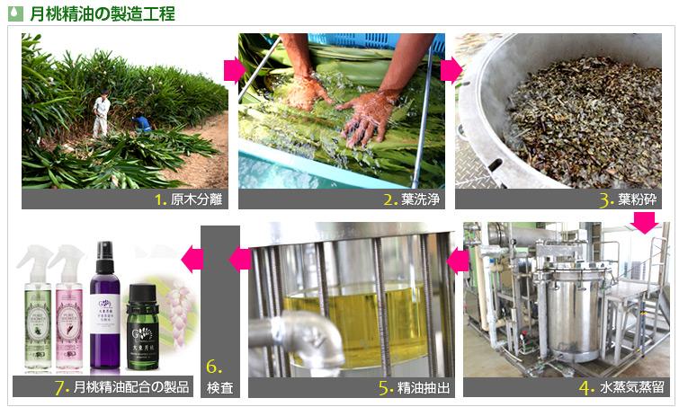 月桃精油の製造工程