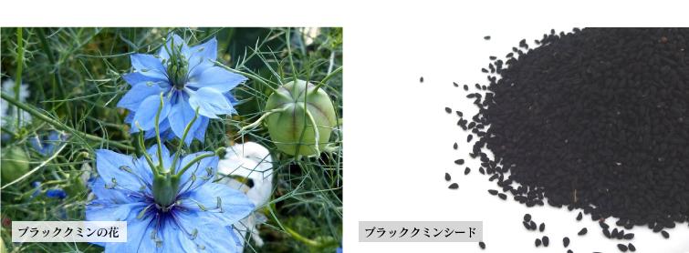 ブラッククミンの花とブラッククミンシード