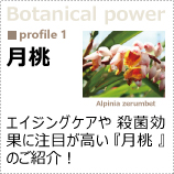 植物のパワーに着目!「月桃」