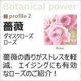 植物のパワーに着目!「薔薇ローズ」