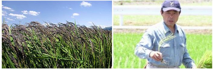 北海道産はちみつ(シナ);北海道産シナノキ(菩提樹)から採蜜したはちみつ100% ハーブのような爽やかな香り