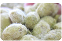 蔵つき麹菌使用