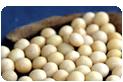 国産有機大豆