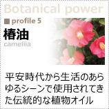 植物のパワーに着目!「椿油」 平安時代から生活のあらゆるシーンで使用されてきた伝統的な植物オイル