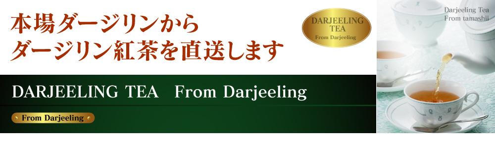 本場ダージリンからダージリン紅茶を直送します